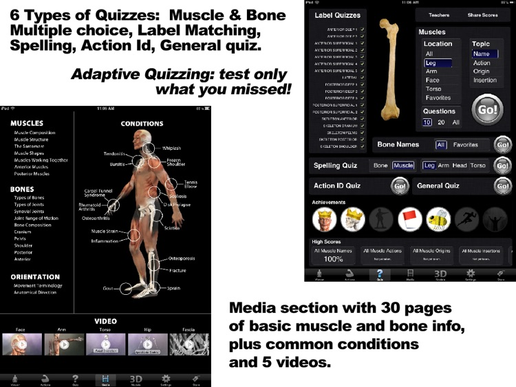 Muscle & Bone Anatomy 3D screenshot-4
