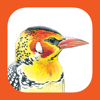 mydigitalearth.com - eGuide to Birds of East Africa artwork