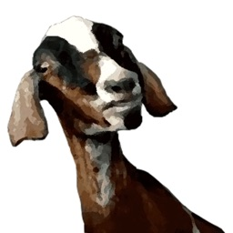Goats - You have Goat to be Kidding Me