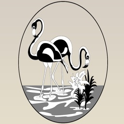 Flamingo Bird Stickers : Pink is the New Black!!