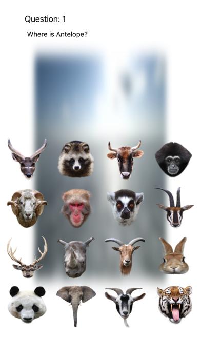 Animal Faces Touch 〜動物の顔を当ててみよう〜のおすすめ画像1