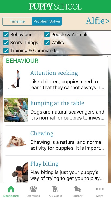 Puppy School: your complete dog training guide