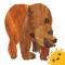 App Icon for Eric Carle's Brown Bear Animal Parade App in Belgium IOS App Store