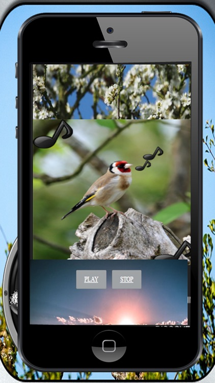 Bird song Silvestes screenshot-4
