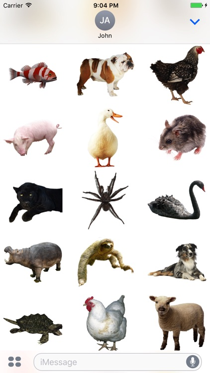 Fun Animals Stickers