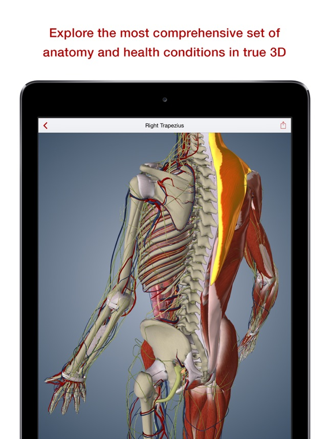 Biodigital 3d Human Anatomy On The App Store