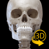 Skeleton 3D Anatomy