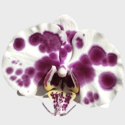 Real Orchid Stickers