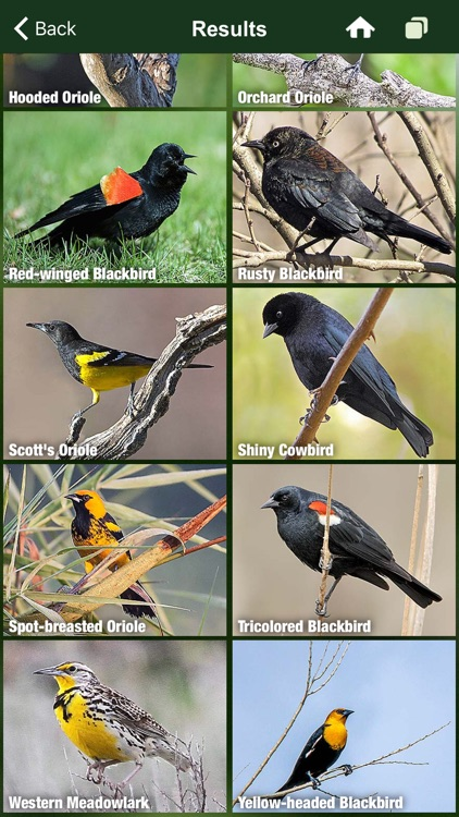 Bird Songs USA & Canada 3100 birds' songs + calls