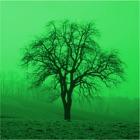Deciduous trees icon