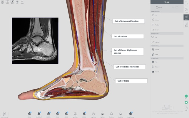 Complete Anatomy 2018 +Courses on the Mac App Store