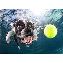 Dog Under Water Funny Sticker
