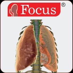 LUNGS - Digital Anatomy
