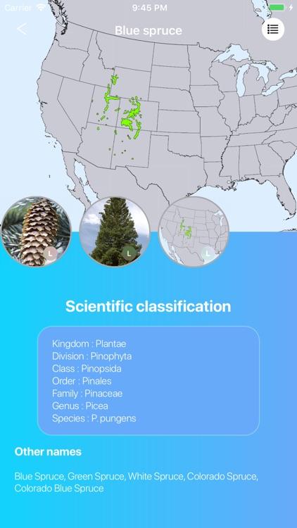 Conifers screenshot-3