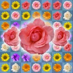 Blossom Link Mania