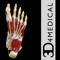 App Icon for Ankle & Foot Pro III App in Denmark IOS App Store