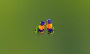 Parrot Catalog