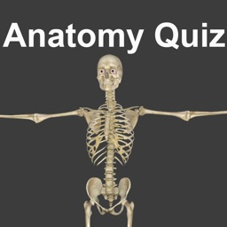 Anatomy Quizzes