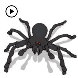 Animated Black Spider Sticker