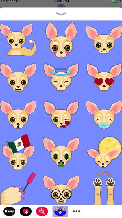 Cream Chihuahua