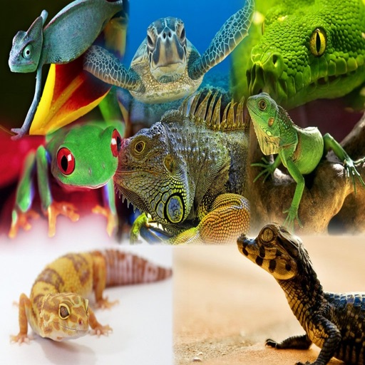 Animals : Reptiles Quiz icon