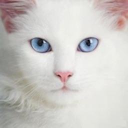 Cats Pedia