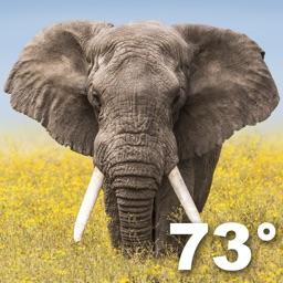 Wildlife Weather