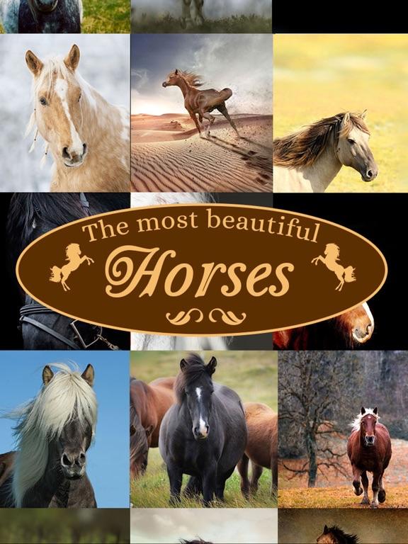 Horses - Wallpapers + Add Text screenshot 7