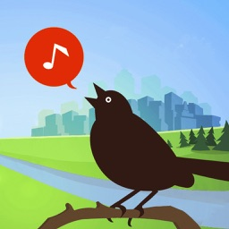 Chirp! Bird Songs & Calls USA