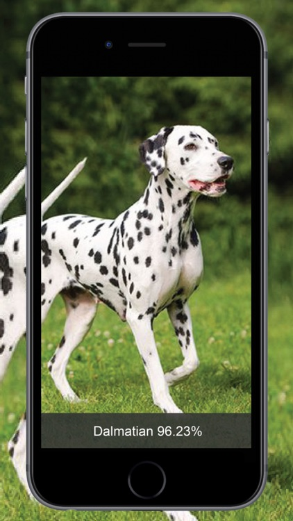 Dog Identify-Breed Identifier
