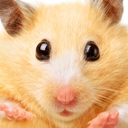 Hamster Jigsaw Puzzle Games