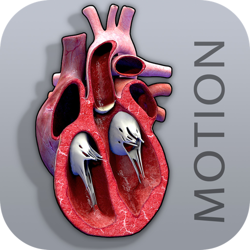 Cardiac Cycle Open Heart