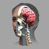 ザイゴット3D人体解剖