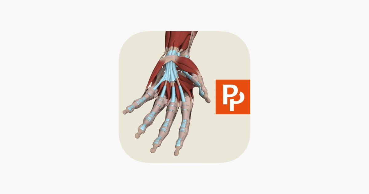 Forearm Hand 3d Real Time On The App Store