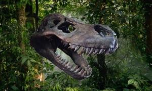 Dino Quiz 4 Kidz