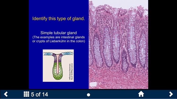 Histology - Basic Tissues screenshot-3