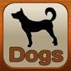 1,337 犬、獣医