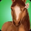 Horse Hotel - 照顾马匹