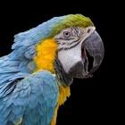 Papageie 2.0 icon