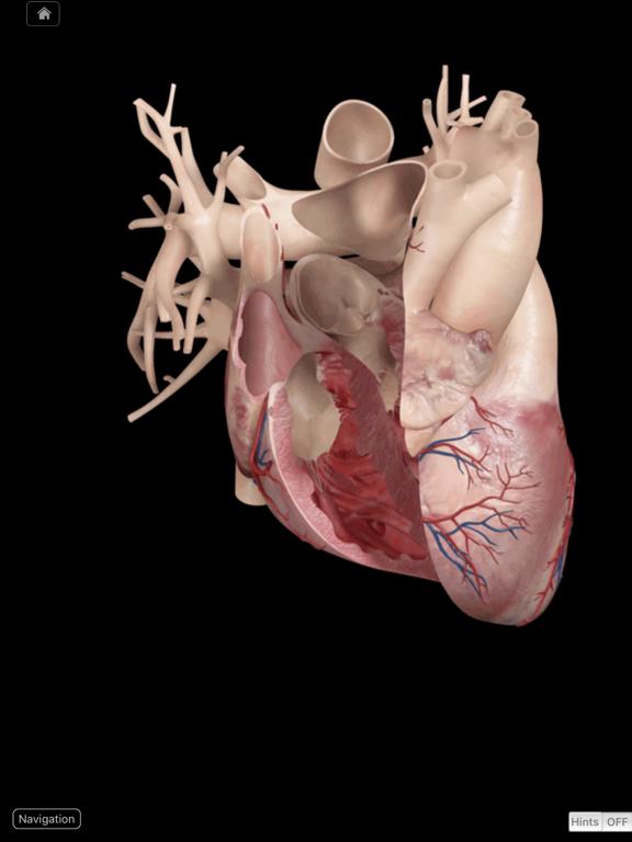 Heart Pro III Screenshot 1