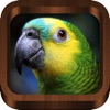 Bird Songs - Bird Call & Guide - iPhoneアプリ