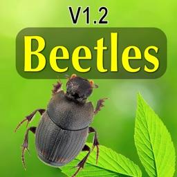 North American Beetles