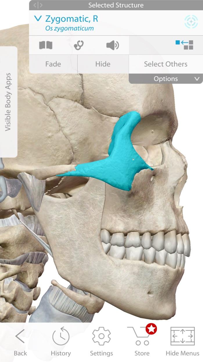 Skeleton Anatomy Atlas: Essential Reference Screenshot