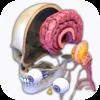 Brain Motion Info
