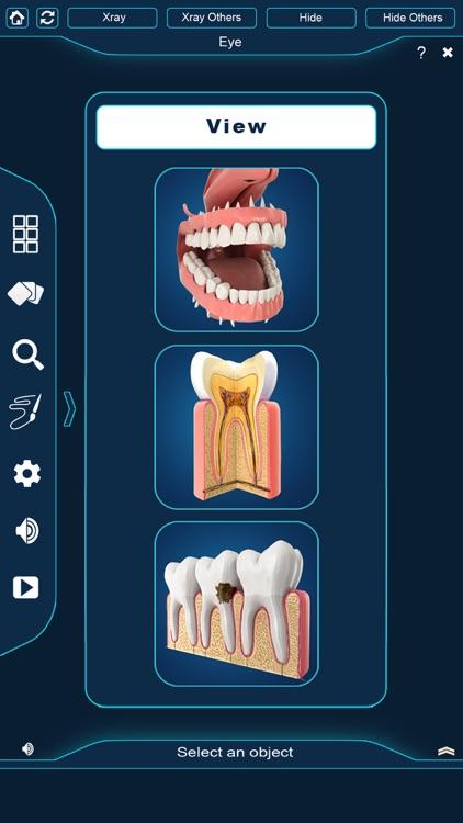 My Dental Anatomy