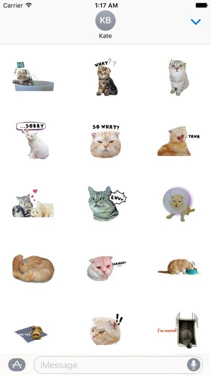 Adorable Scottish Fold Cat Sticker