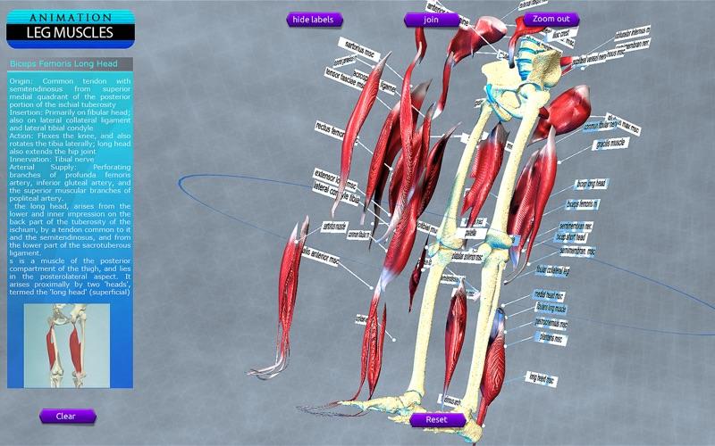 Leg Muscles Motion скриншот программы 5