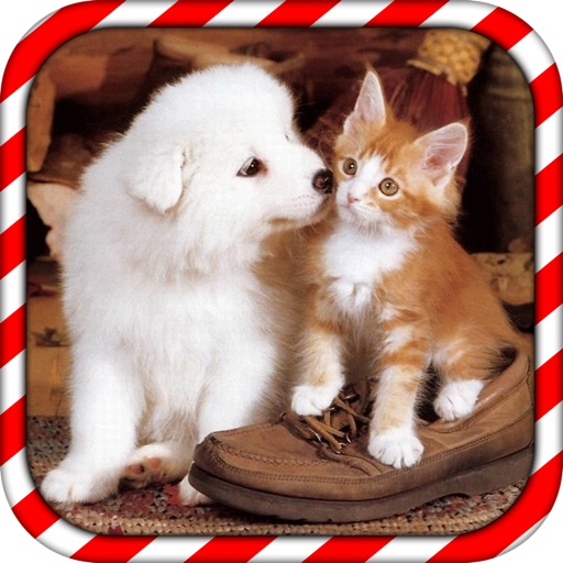 Dog Love Cat Puzzle icon