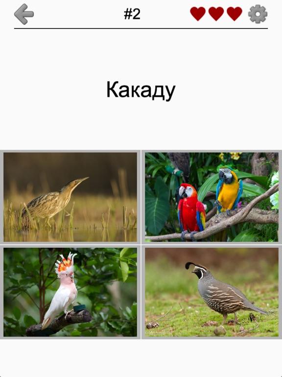 Животные - Все звери и птицы для iPad