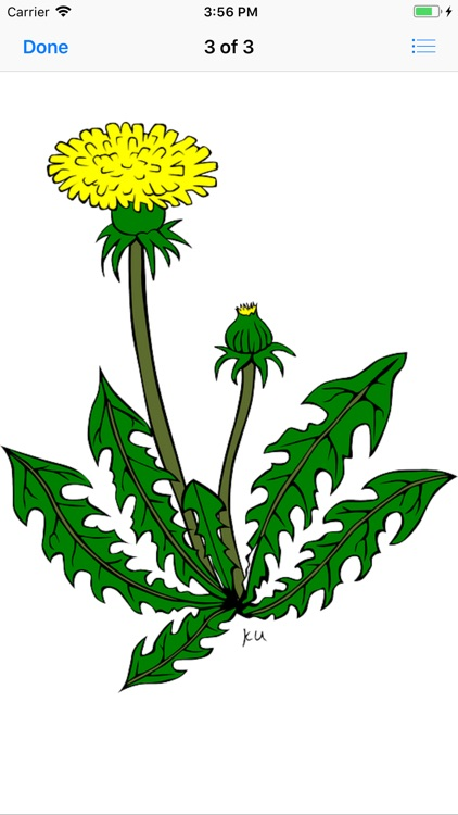 Dandelion Stickers